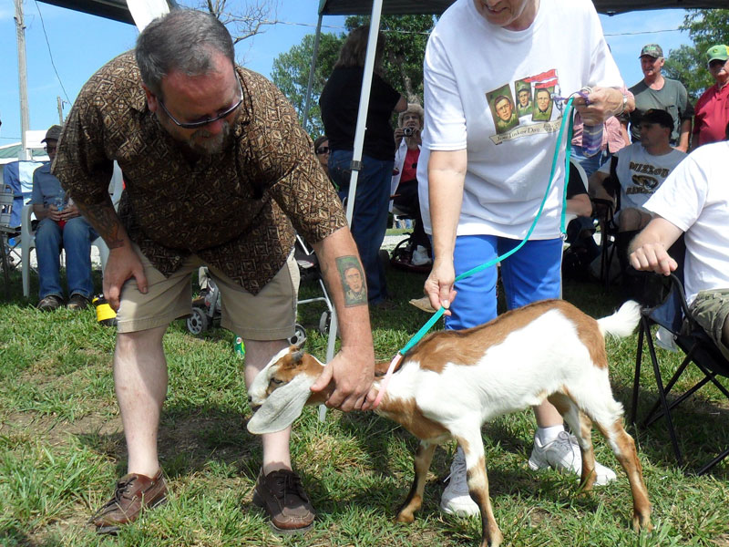 Tinker with goat